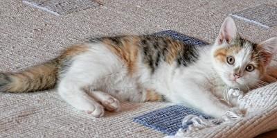 cat-535011_1280